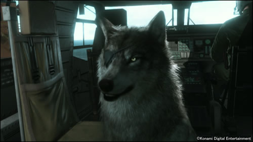 DD, le chien de Big Boss, s'illustre en images